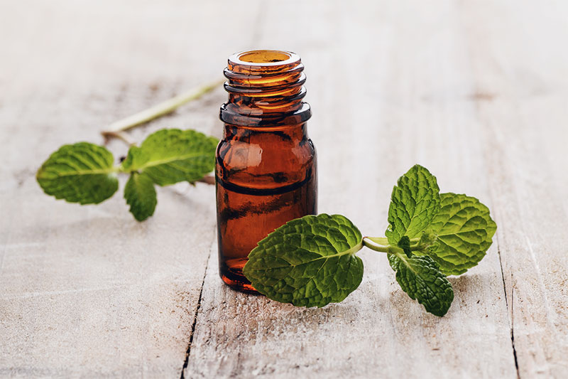 Mint Oil for Sore Muscles