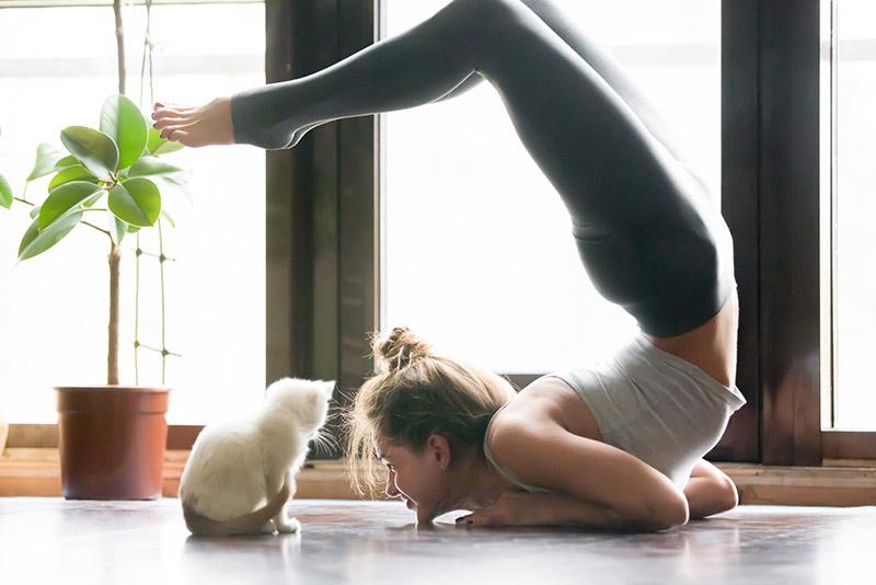 Eine Frau macht Yoga mit ihrer Katze