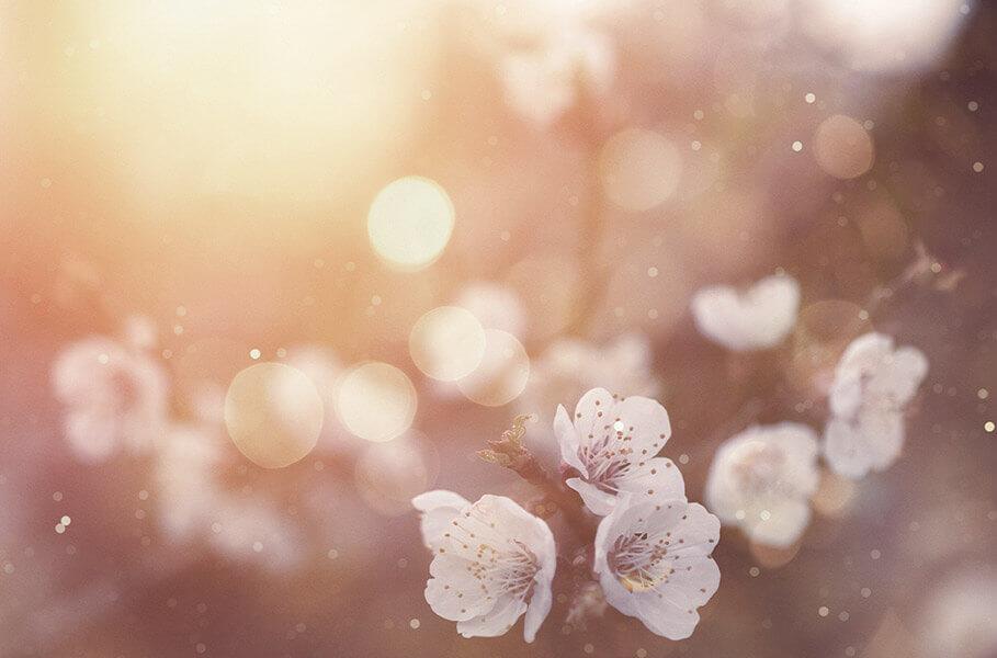 alergias respiratórias são às vezes desencadeadas pelo pólen das flores