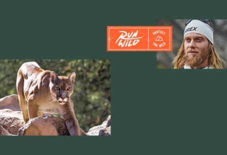 La lionne des montagnes et le runner de trail Timothy Olsen