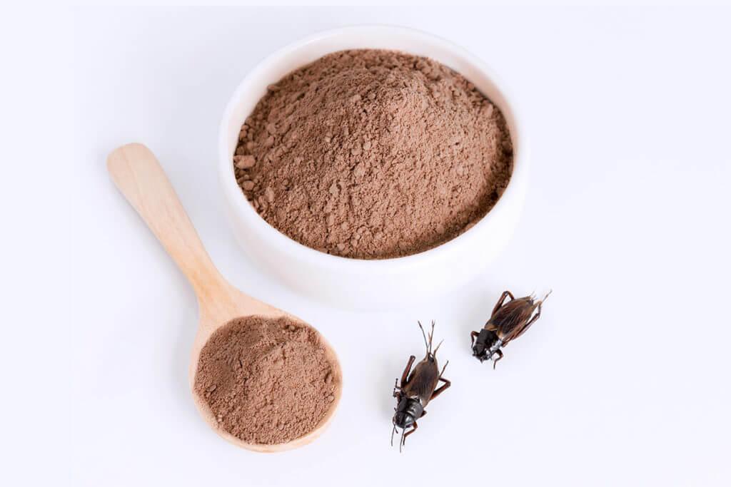 Les insectes comestibles sont une nouvelle source de protéines !